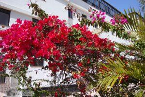 Tenerife_14