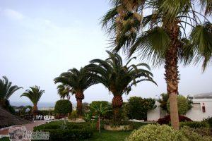 Tenerife_17